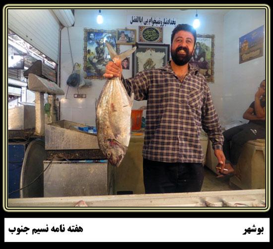 روایتی تصویری یک روز در بازار ماهی فروشان بوشهر