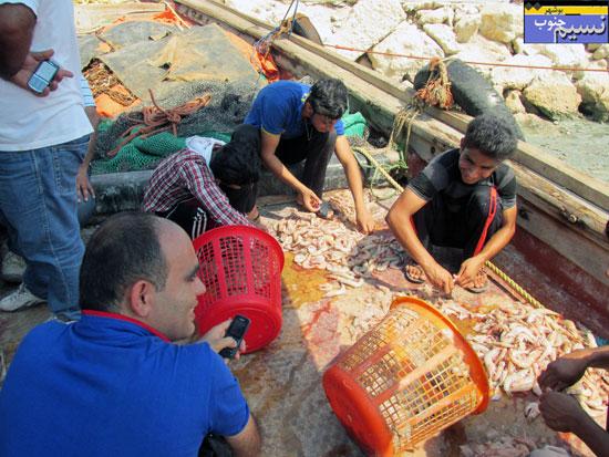 گزارش تصویری نسیم جنوب از فروش میگو در بوشهر