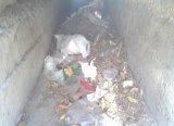 پسماندها، تهدیدی جدی برای نظافت بوشهر + تصاویر