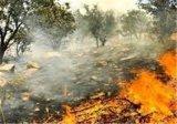آتش سوزی در کوه بیرمی